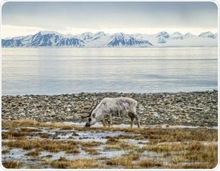 Methane Seeps from Svalbard Seafloor Deposits Release Less Greenhouse Gas